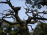 The branches intertwine with one tree and the two represent the love between the last emperor (Pu Yi) and his wife - together on earth and in heaven